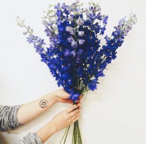 Blog, Flowers of Bath, Delphiniums