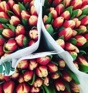 February blog - tulips